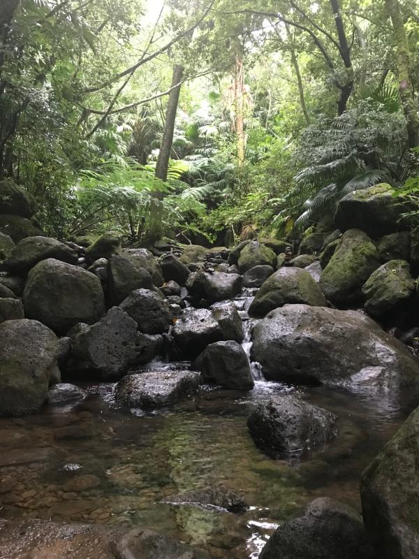 Manoa Falls, HI